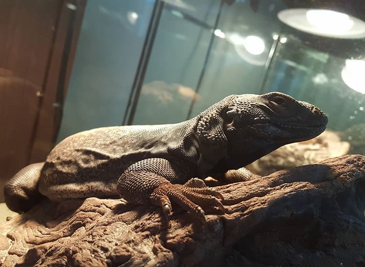 Everything Worth Knowing About Bearded Dragons