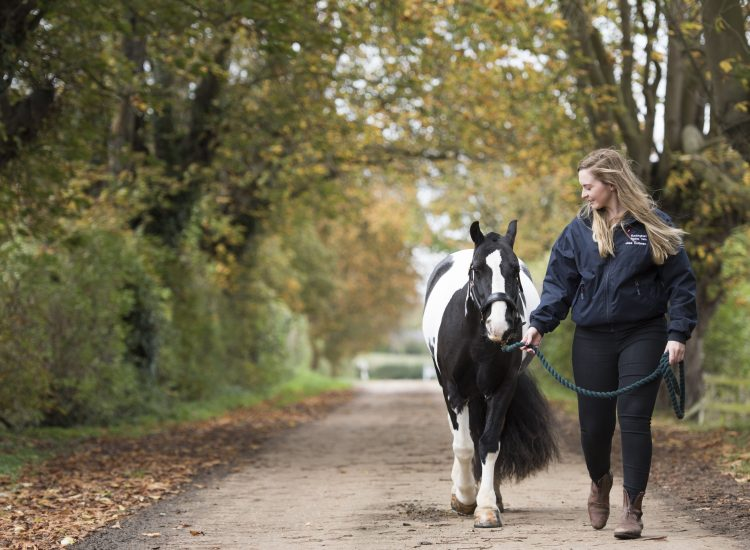 Top Tips for Horse Care