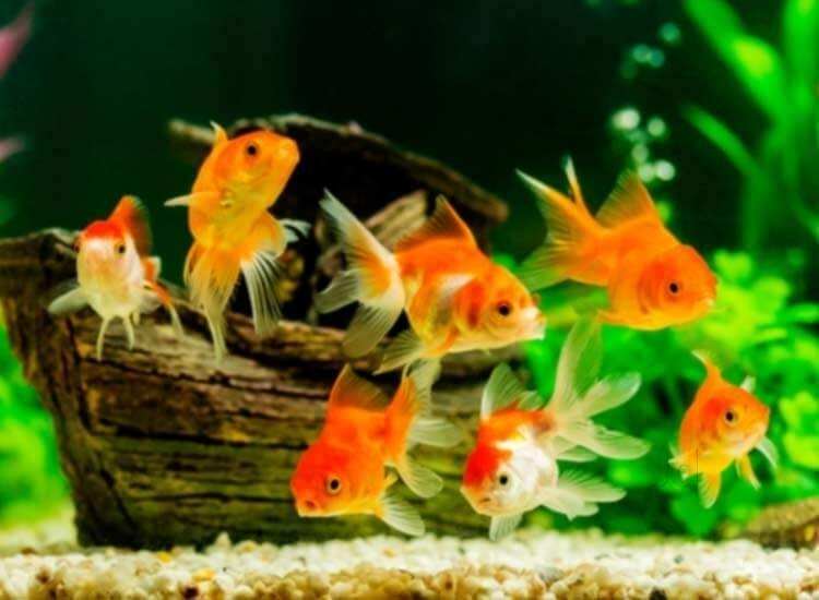 Planted Aquariums: Freshwater Plant Care Tips