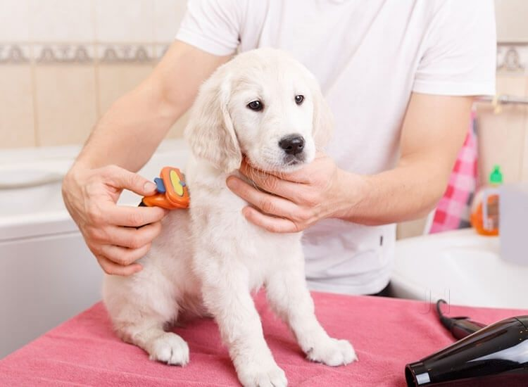 How to Choose a Groomer for Your Dog